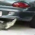 Krokodyl samochodowy