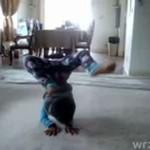 Maluch - mistrz breakdance'u!