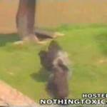 Dziecko wpadło do zagrody goryli