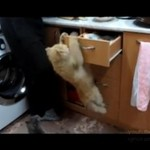 Koty do zadań specjalnych