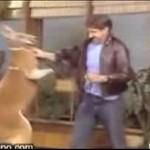 Ten kangur nie miał parcia na szkło...