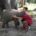 Mały słonik lubi się przytulać