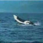 Morskie ryzyko