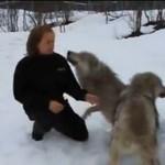 Kobieta wita się z wilkami - WOW...