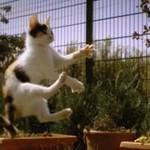Słodkie kotki w slow motion