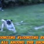 Pies, który nie potrafi... BIEGAĆ!