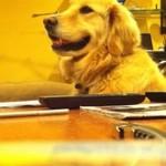 Pies kocha grę na gitarze