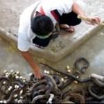 Czyszczenie wybiegu dla węży - O MATKO!