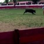 Śmiałek vs byk