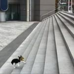 Sprytny pies bawi się sam ze sobą