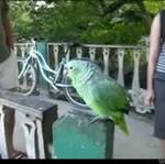 Papużka ma doskonały nastrój!