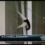 Pech rumuńskiego kociaka - BIEDNY!
