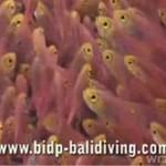 Zwiedź z nami rafę koralową