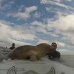 Foczka ZAPRZYJAŹNIŁA się z surferem