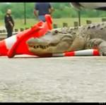 Policja kontra aligator - OBŁAWA!