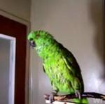 """""""Bad Bird Bad Bird"""" - REWELACYJNE ptaszysko!"""