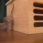 Triki w wykonaniu myszy - SUPER!