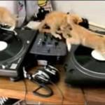 Didżejska zajawka kotków