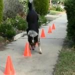 Jumpy - najbardziej wysportowany pies świata