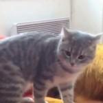 Najzabawniejsze koty 2013 roku
