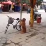 Pies pilnuje roweru swojego właściciela