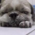 KolekcjonerSŁODKOŚCI - śpiący szczeniak