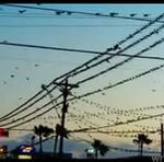 Inwazja ptaków w Teksasie - WOW!