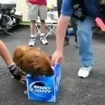 Nawet nie myśl o tym, żeby dotknąć jego piwa!