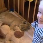 Małe lwiątko bawi się z trzylatką