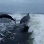 Zderzenie delfinów - HA, HA, HA!