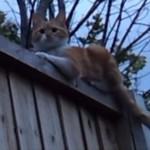 Kot odpowiada na powitanie