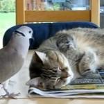Ptak nie daje spać kotu