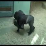 Goryl tańczy BREAKDANCE!