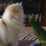 Zabawne zwierzaki - WYMIATAJĄ!