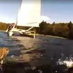 Żeglarze uratowali wiewiórkę... na środku jeziora!