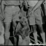 Wojtek, polski niedźwiedź-żołnierz