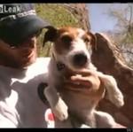 Pies, który potrafi się wspinać!