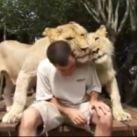 Kolekcjoner SŁODKOŚCI - małe lwiątka