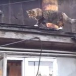 Koci złodziejaszek przyłapany!