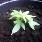 Akcja na rzecz legalizacji - na ulicy!