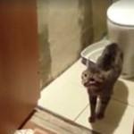 Wściekły kot broni dostępu do toalety
