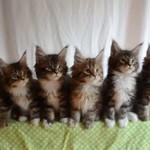 Koty z pełną synchronizacją