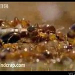 Inteligencja mrówek - będziesz w szoku!