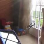 Pies śpiewa przeboje Lady Gagi i Ushera!