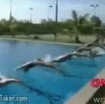 Jak trenują australijscy pływacy?