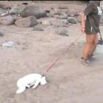 """""""Szczęśliwy"""" kot na spacerze"""