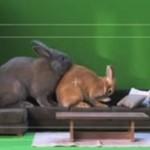 Gdy chcesz zrobić reklamę z królikiem...