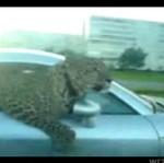 Audi TT i jaguar - BOGACTWO PSUJE