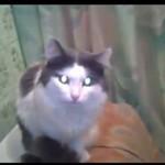Ten kot pragnie odrobiny prywatności!
