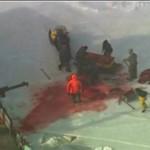 Tak się zabija foki w Kanadzie - DRASTYCZNE!